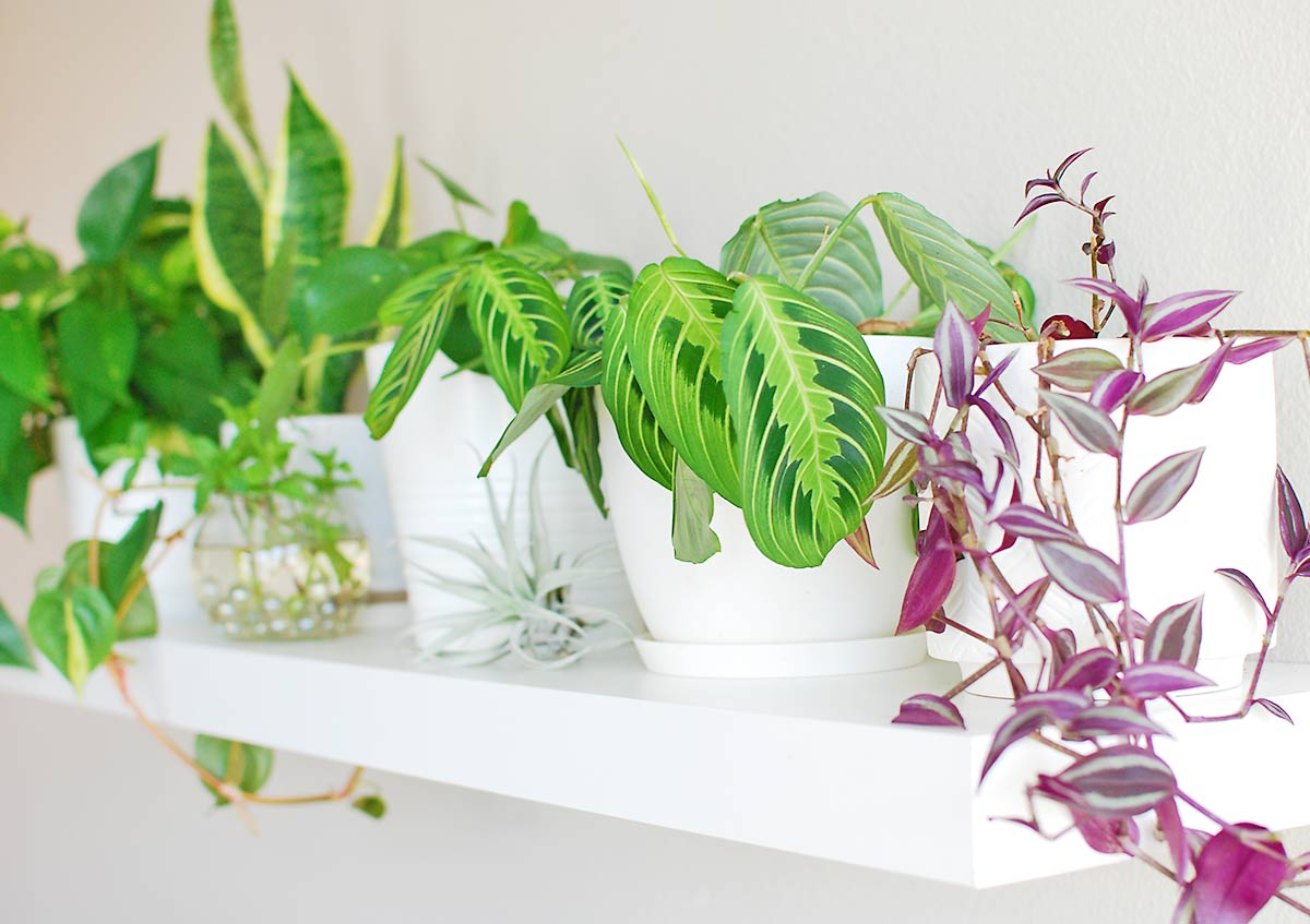 13 Indoor Plant Shelf Concepts You'll Need To Replica Now!